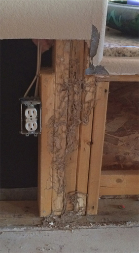 termite damage picture