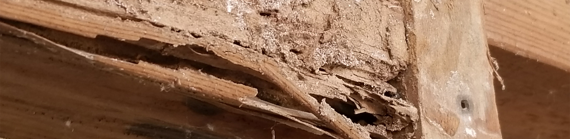 Questions about Termites in Phoenix
