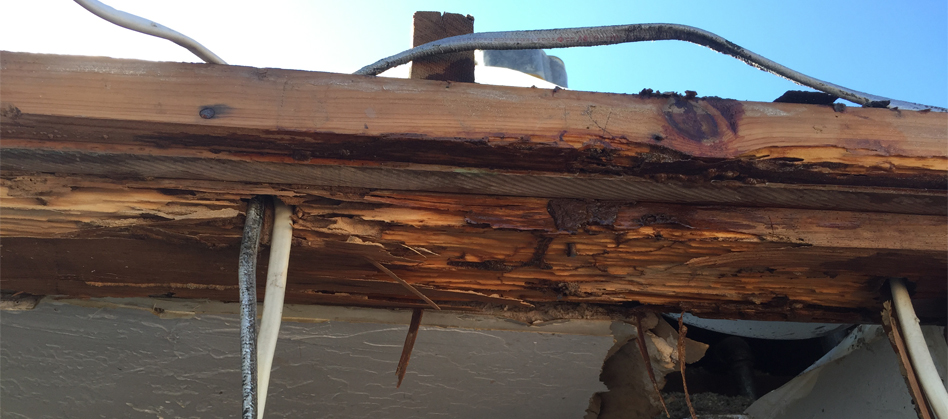 Termite Wood Rot